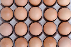 Eggs. Many rows of fresh eggs Stock Photos