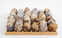Eggs Matrix Stock Photography