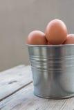Eggs in metallic bucket Stock Photography