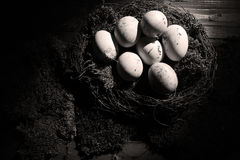 Eggs in the moss Stock Photography