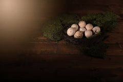 Eggs in the moss Stock Images