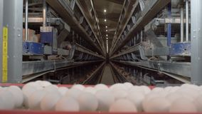 Eggs moving on the conveyer in factory. Transportation and industrial plant selection for egg stock video footage