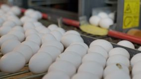 Eggs moving on the conveyer in factory. Transportation and industrial plant selection for egg stock footage