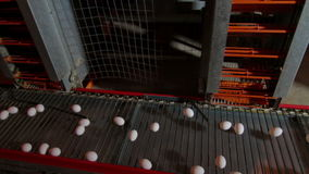 Eggs moving on the conveyer in factory. Transportation and industrial plant selection for egg stock video