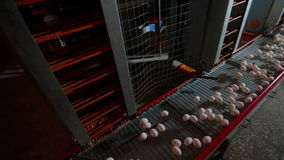Eggs moving on the conveyer in factory stock footage