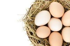Eggs Nahaufnahme Lizenzfreies Stockfoto