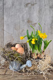 Eggs and narcissus Stock Photography