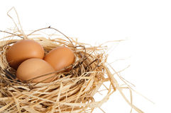 Eggs In Nest Royalty Free Stock Photos