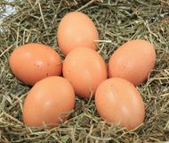 Eggs in a nest Royalty Free Stock Photo