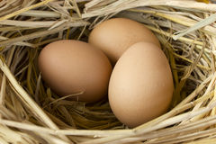 Eggs in the nest. Stock Image