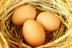 Eggs in the nest. Stock Photo