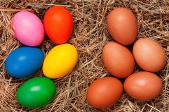 Eggs in nest Stock Images
