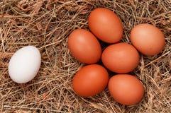 Eggs in nest Stock Photos