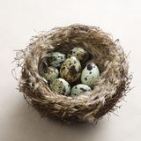 Eggs in nest. Royalty Free Stock Photos