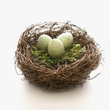 Eggs in nest. Stock Photography