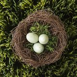 Eggs in nest. royalty free stock image
