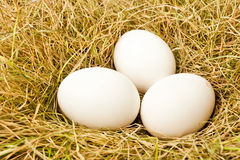 Eggs in the nest Royalty Free Stock Photo