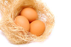 Eggs in the nest. Three brown eggs in the nest Stock Photos