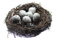 Eggs in nest. Small and speckled bird eggs in a nest Stock Image