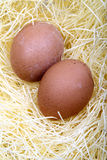 Eggs in the nest. Royalty Free Stock Photo
