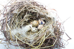 Eggs in the nest of a bird Stock Photography
