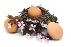Eggs in a nest with blossom. Eggs in a nest with pink blossom Royalty Free Stock Photo