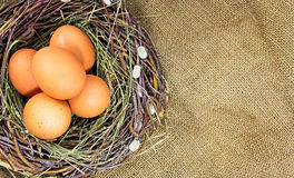Eggs in nest. Royalty Free Stock Images