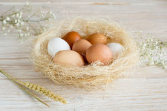 Eggs in a nest. Brown and white eggs in a nest on a white wooden table royalty free stock photography