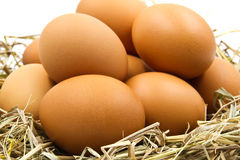 Eggs in a nest. Royalty Free Stock Images