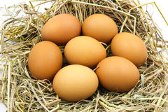 Eggs in a nest. Royalty Free Stock Image