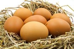 Eggs in a nest. Stock Photos