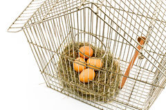 Eggs in Nest confined in Bird Cage. Isolated on with stock photos