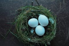 Eggs in a nest Royalty Free Stock Photography