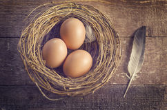 Eggs in nest with feathers. Three eggs in a nest with feathers royalty free stock photography