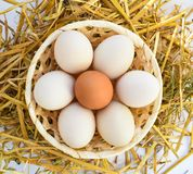 Eggs in nest food straw chicken stock photography