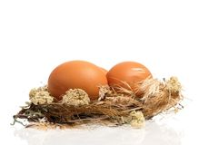 Eggs in nest Stock Photography