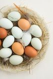 Eggs in a nest. Fresh light green eggs from Easter egger chicken and brown eggs in a nest made of straw on a plate Royalty Free Stock Photography