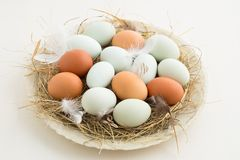 Eggs in a nest. Fresh light green eggs from Easter egger chicken and brown eggs in a nest made of straw on a plate stock images