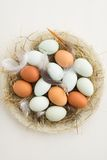 Eggs in a nest. Fresh light green eggs from Easter egger chicken and brown eggs in a nest made of straw on a plate stock photos