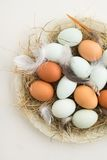 Eggs in a nest Stock Photos