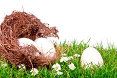 Eggs in nest on  fresh spring green grass Stock Image