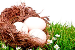 Eggs in nest on  fresh spring green grass Royalty Free Stock Images