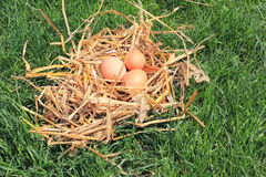 Eggs in the nest on the grass. Eggs in the nest of straw on the grass Stock Photo