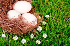 Eggs in nest on green grass. Royalty Free Stock Photo