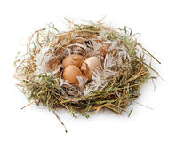 Eggs in the nest isolated. Three brown eggs in the nest isolated Royalty Free Stock Photo