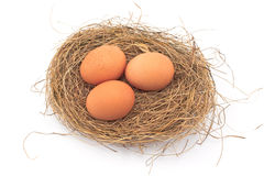 Eggs in Nest isolated Royalty Free Stock Photos