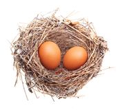 Eggs in nest isolated Royalty Free Stock Image