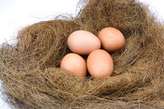 Eggs in a nest. Isolated on a white background Royalty Free Stock Photo