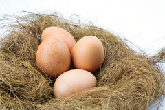 Eggs in a nest. Isolated on a white background Royalty Free Stock Image
