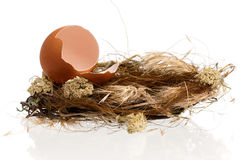 Eggs in nest royalty free stock images
